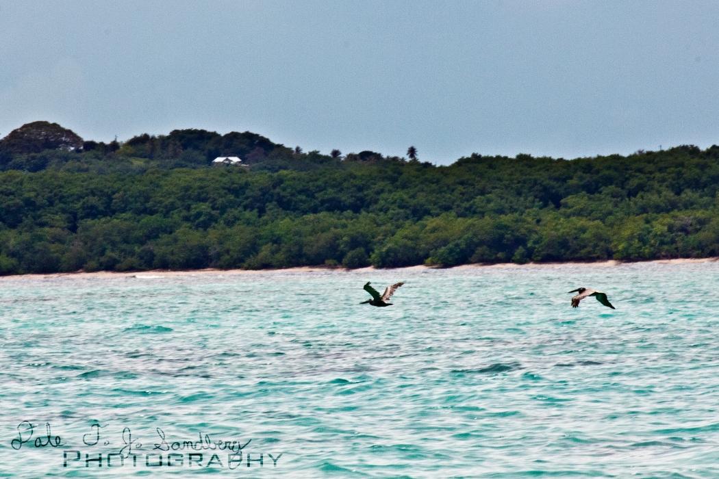 Birds at Tobago